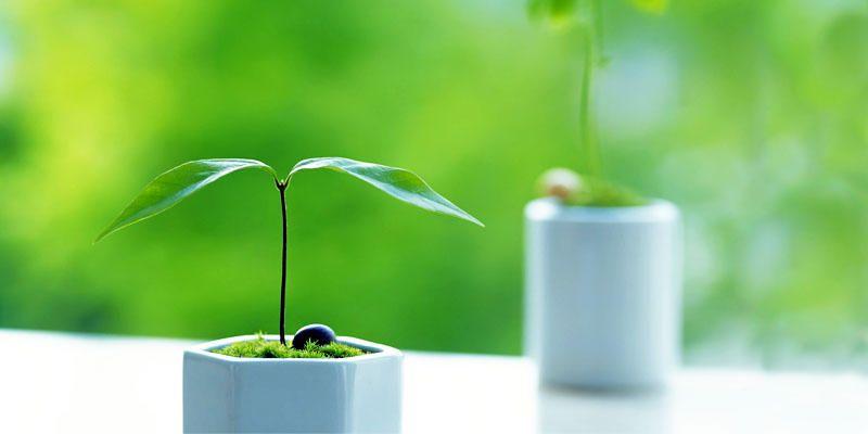 5 utili suggerimenti per le vostre piante d'appartamento 1-800x400
