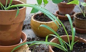 Il rinvaso e la ripresa vegetativa-300x180