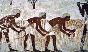 L'agricoltura nel Vecchio Mondo-300x180