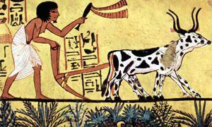 L'inizio dell'agricoltura-300x180