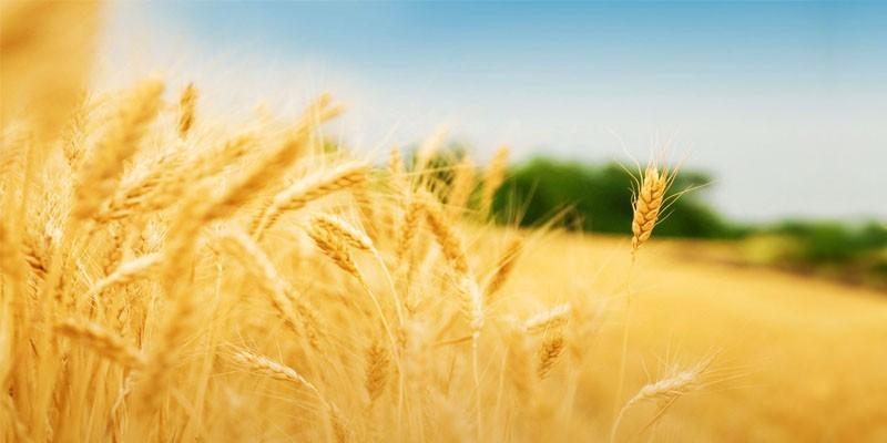 L'uomo, l'agricoltura e le piante 2-800x400