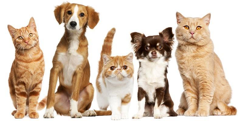 Primo Soccorso Per Cani E Gatti 5 Informazioni Utili Best5it