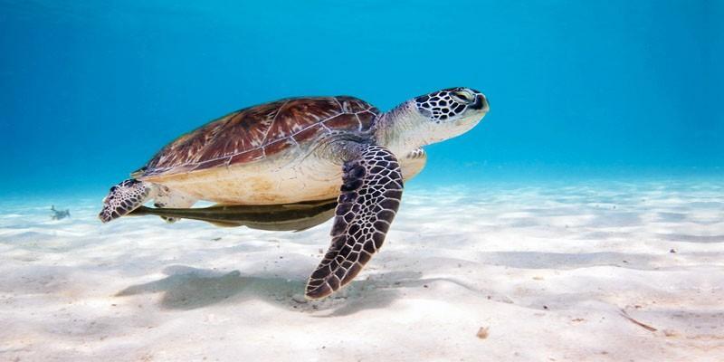 tartaruga marina non si muove
