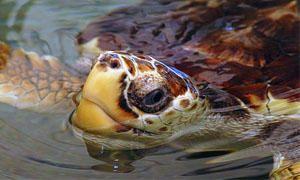Tartarughe d'acqua-Cosa sono-300x180