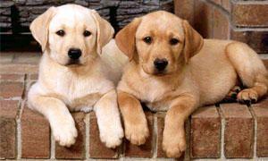 5 favole sui cani-300x180