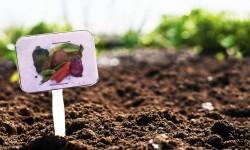 Biogiardinaggio-come prendersi cura della terra e nutrirla bene 2-800x400