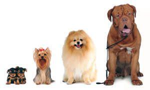 Come scegliere un cane-300x180