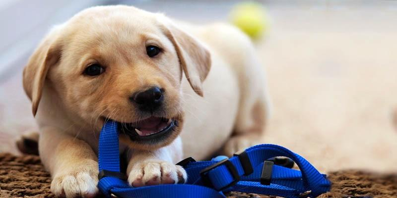 Vivere con il nostro cane-ciò che bisogna sapere 1-800x400
