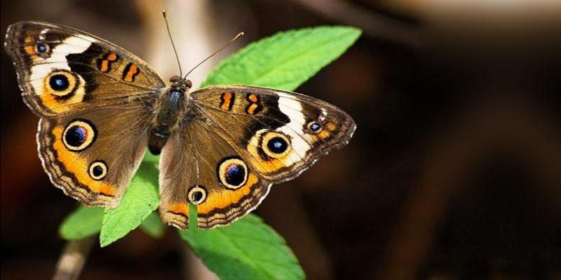 5 cose sulle farfalle e falene ossia sui Lepidotteri 3-800x400