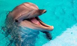 Balene e delfini- tra mito e realtà 3-800x400