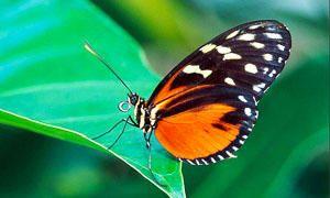 I Lepidotteri-300x180