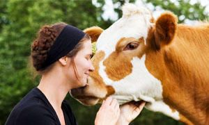 Ogni vegan salva 1400 animali-300x180
