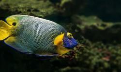 Pesci d'acquario- 5 malattie provocate da virus e da batteri 4-800x400