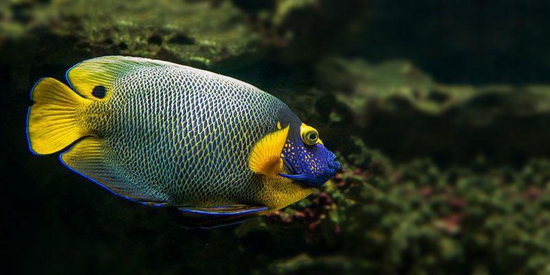 Pesci d 39 acquario 5 malattie provocate da virus e da for Acquario per pesci
