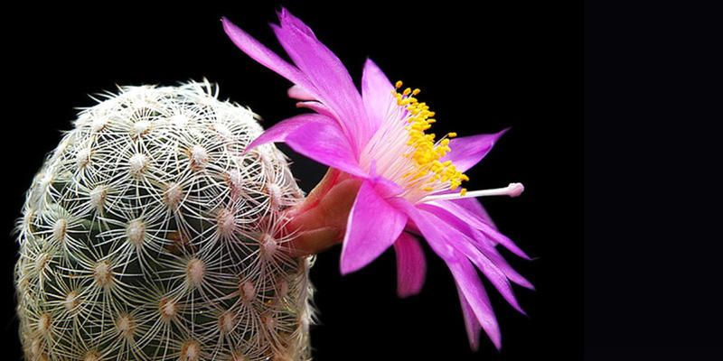 Cactus-5 esemplari spettacolari 2-800x400