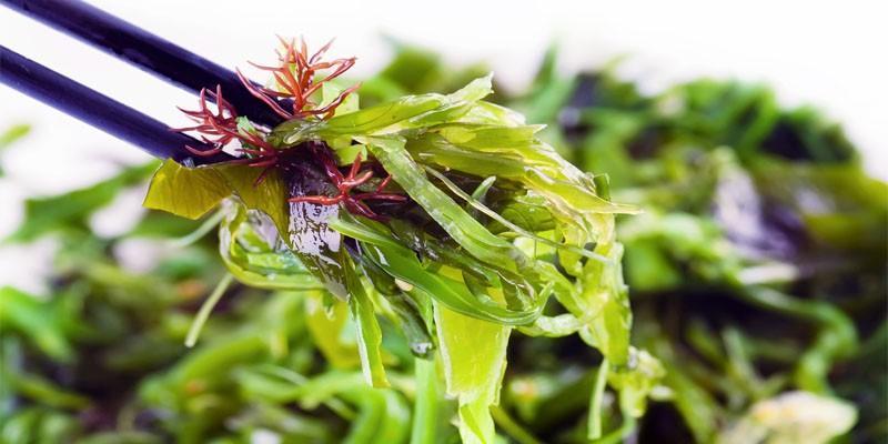 Le alghe marine più utilizzate nell'alimentazione 1-800x400