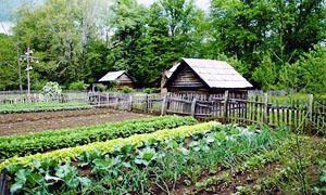 Rotazione e consociazione- i capisaldi del giardinaggio biologico-300x180