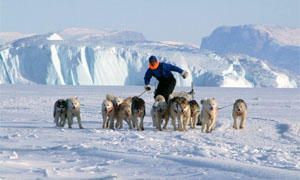 Tra cane (Groenlandese) e lupo (Artico), gli ordini e gli attacchi-300x180