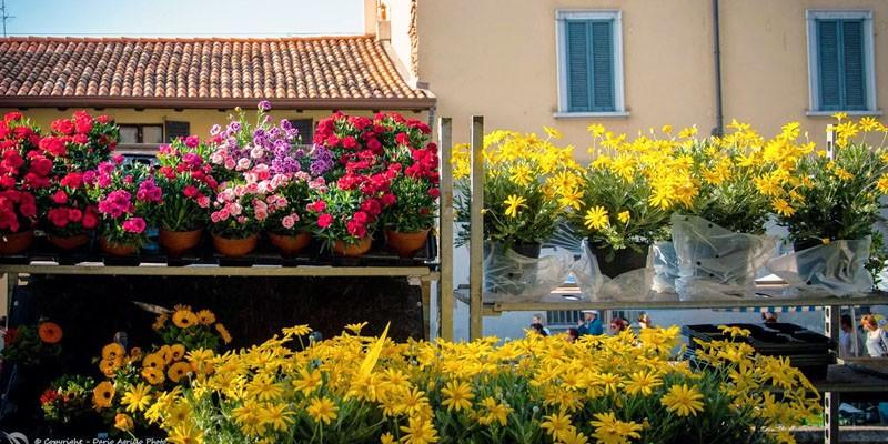 5 mercatini di fiori sparsi per l'Italia 1-800x400
