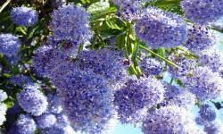 5 piante che fioriscono in autunno 2-800x400