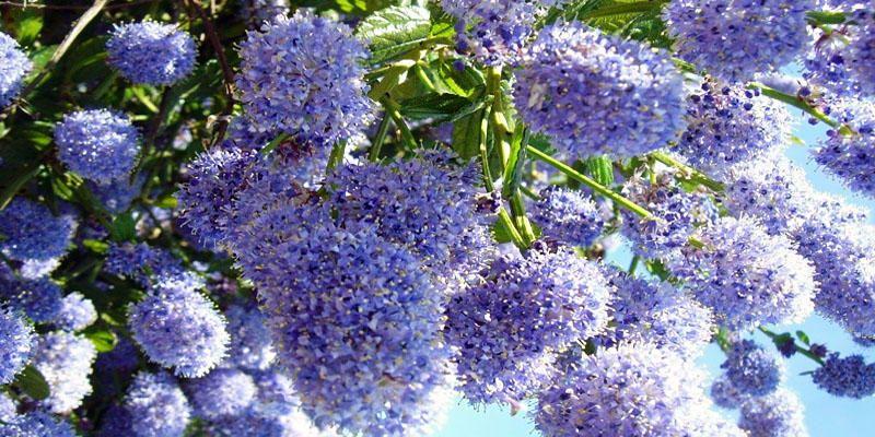 5 piante che fioriscono in autunno for Piante che fioriscono in inverno