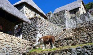 Le abitazioni Incas-300x180