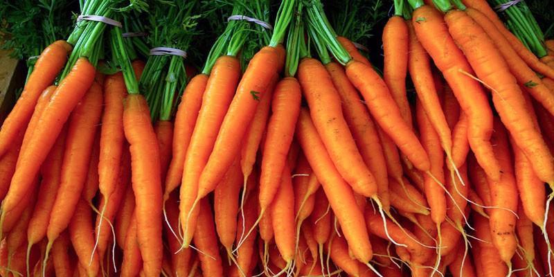 Le carote 5-800x400