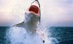 Lo squalo bianco 2-800x400