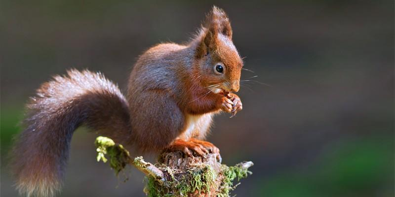 5 generi di scoiattoli meno comuni 3-800x400