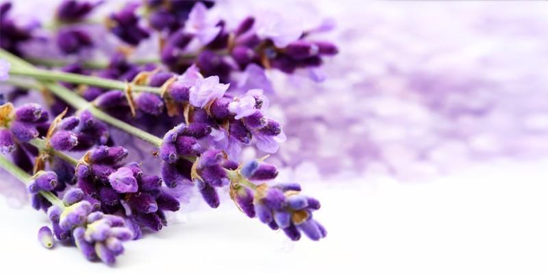 5 piante aromatiche che meritano di essere coltivate1-800x400