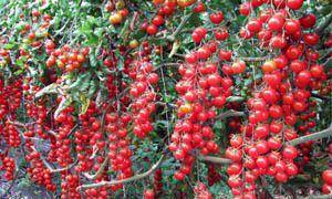 Allevamento delle piante e altre cure-300x180