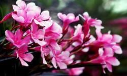 5 piante bellissime... ma mortali 1-800x400