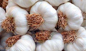 Aglio bianco - Allium sativum-300x180