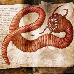 Il verme dell'Indo-250x250