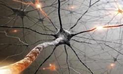 5 famose malattie del sistema nervoso-800x400