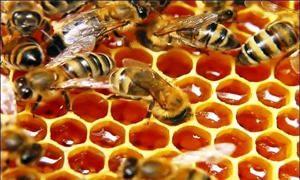 Le Proprietà Medicinali del Miele-300x180