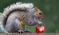 Gli scoiattoli domestici e le loro malattie più comuni3-800x400