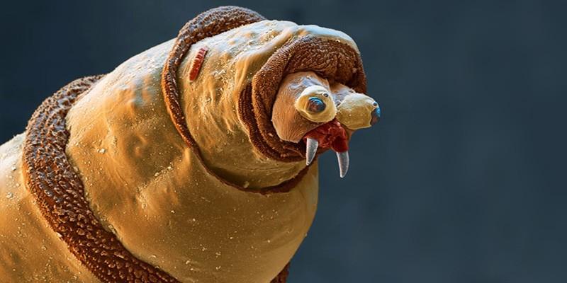 5 orripilanti parassiti umani-800x400