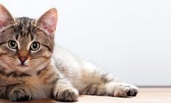 I sensi del gatto1-800x400
