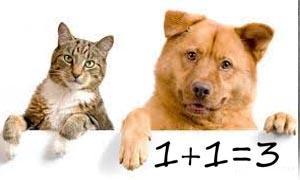 È più intelligente il cane o il gatto-300x180