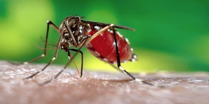 Come scegliere le armi giuste contro le zanzare2-800x400