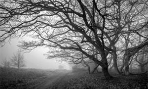 Fotografa in condizioni di luce scarsa-300x180