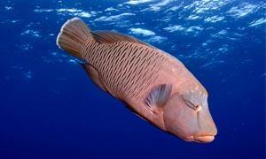 Giganti di taglia abbordabile per l'acquario-300x180