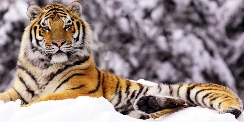 Gli animali più minacciati del pianeta1-800x400