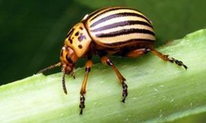 Gli insetti possono essere alleati dell'uomo-300x180
