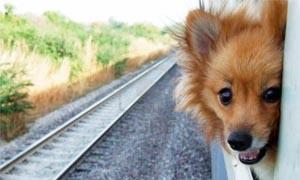 In treno-300x180