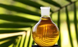 Olio di palma-300x180
