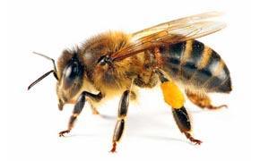 Perché gli insetti sono animali meravigliosi-300x180