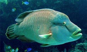 Una ingombrante bellezza caraibica-300x180