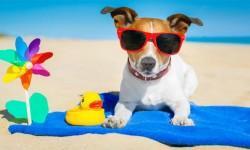 animali domestici e viaggiare4-800x400
